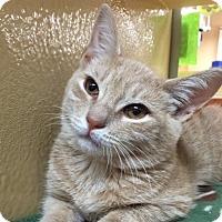 Adopt A Pet :: Eggnog - Long Beach, NY