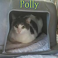 Adopt A Pet :: Polly - Pensacola, FL