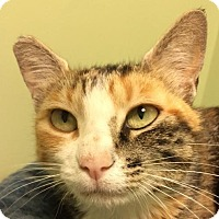 Adopt A Pet :: Calypso - Auburn, CA