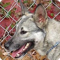 Adopt A Pet :: Little Lady - Lexington, KY