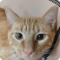 Adopt A Pet :: Morris - Maryville, TN