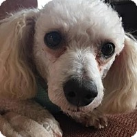 Adopt A Pet :: Jack - Des Moines, IA