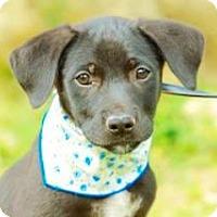 Adopt A Pet :: Karl - San Ramon, CA