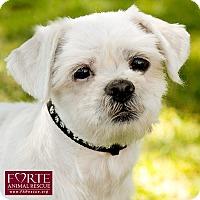 Adopt A Pet :: Max - Marina del Rey, CA