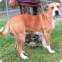 Adopt A Pet :: Bubba - Reeds Spring, MO