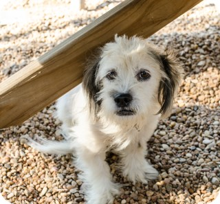 Maltese/Terrier (Unknown Type, Small) Mix Dog for adoption in Norwalk, Connecticut - Molly