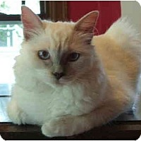 Adopt A Pet :: Lola in Portland - Keizer, OR