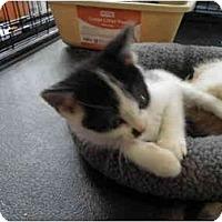 Adopt A Pet :: Panini - Warren, MI
