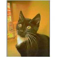 Adopt A Pet :: Keaton - Owasso, OK