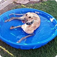 Adopt A Pet :: Yana - Oklahoma City, OK