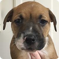 Adopt A Pet :: Calypso#02M - Orlando, FL
