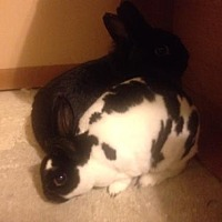 Adopt A Pet :: BunBun and Rex - Willingboro, NJ