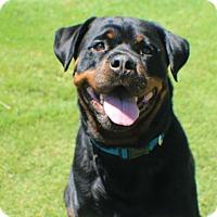 Adopt A Pet :: Miley - Gilbert, AZ