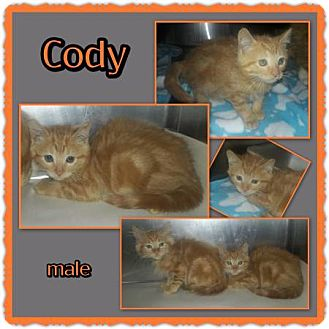 Domestic Mediumhair Kitten for adoption in Richmond, California - Cody
