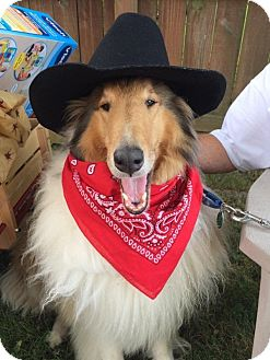 Collie Dog for adoption in Powell, Ohio - Teddy