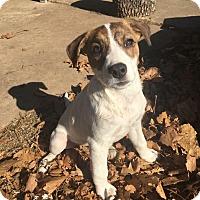 Adopt A Pet :: Yuda - Broken Arrow, OK
