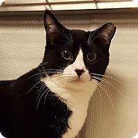 Adopt A Pet :: Baby Hamm - Grayslake, IL