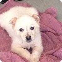 Adopt A Pet :: Zema - Regina, SK