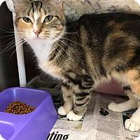 Adopt A Pet :: Nala - Maryville, MO