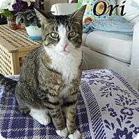 Adopt A Pet :: Ori - Ocean City, NJ