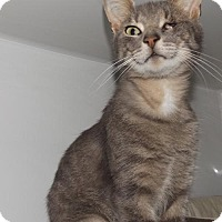 Adopt A Pet :: Sparrow - Orleans, VT