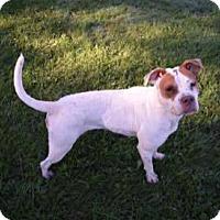 Adopt A Pet :: Lynn - Muskegon, MI