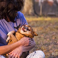 Adopt A Pet :: Adam - Warner Robins, GA