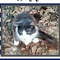 Adopt A Pet :: Waldo - Bogalusa, LA