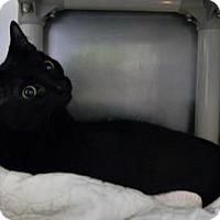Adopt A Pet :: Edmund - New Milford, CT