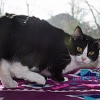 Adopt A Pet :: Violet - Georgetown, KY
