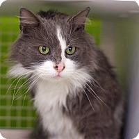 Adopt A Pet :: DaVinci - Troy, MI