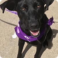 Adopt A Pet :: Jasmine - E. Greenwhich, RI