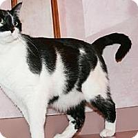 Adopt A Pet :: Maverick - Columbia, SC