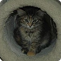 Adopt A Pet :: Larkin - Grand Rapids, MI