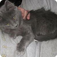 Adopt A Pet :: Pandora - Dallas, TX