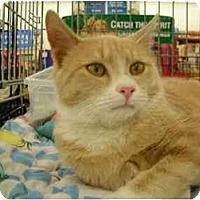 Adopt A Pet :: MIRACLE - Riverside, RI