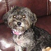 Adopt A Pet :: CupCake - Playa Del Rey, CA