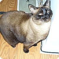 Adopt A Pet :: Koko - Lake Charles, LA