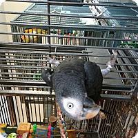 Adopt A Pet :: Biscuit - Punta Gorda, FL