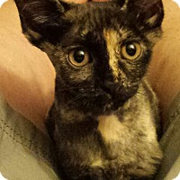 Adopt A Pet :: Zola and Zack - brewerton, NY