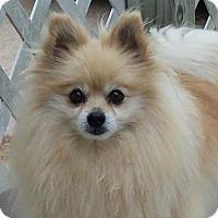 Adopt A Pet :: Max - Broken Bow, NE