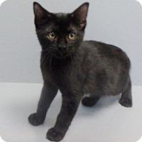 Adopt A Pet :: Bear - Seguin, TX