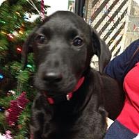Adopt A Pet :: Coffee Bean - Knoxville, TN