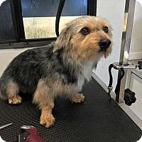 Adopt A Pet :: Buster - Crosbyton, TX