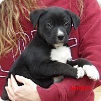 Adopt A Pet :: Dallas (8 lb) Video! - Sussex, NJ