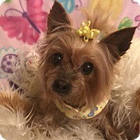 Adopt A Pet :: Moonlight Rose - Canton, IL