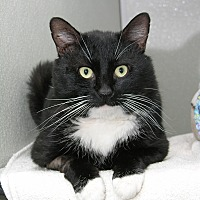 Adopt A Pet :: Hermes - Stamford, CT