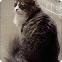 Adopt A Pet :: Mimzi - Mesa, AZ
