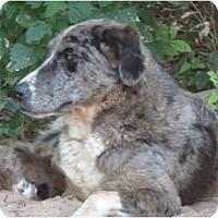 Adopt A Pet :: Tia - E Windsor, CT