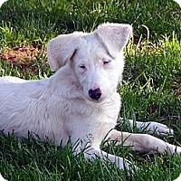 Adopt A Pet :: Quinn - PENDING - Post Falls, ID